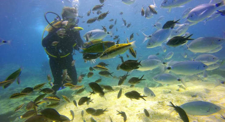 Diving<br>ad Alghero
