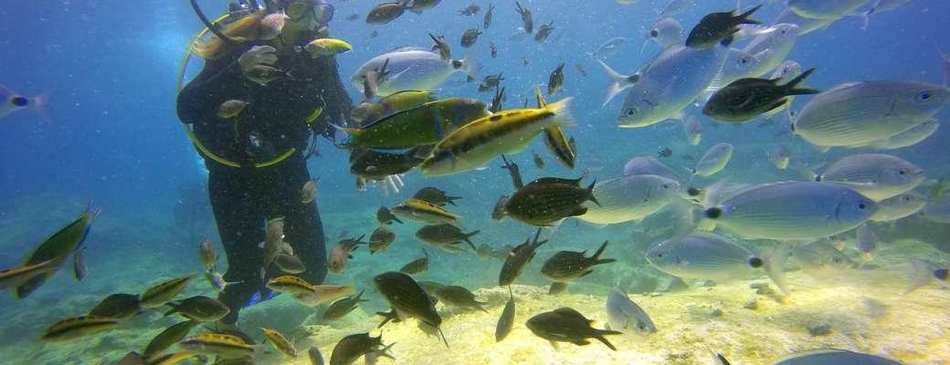 diving_alghero